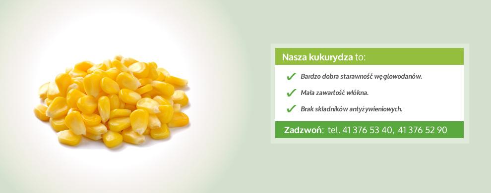 kukurydza paszowa banner